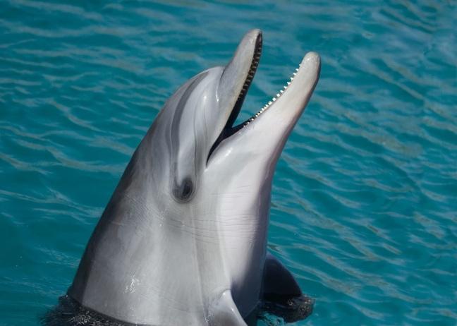 dolphin-sea-marine-smart