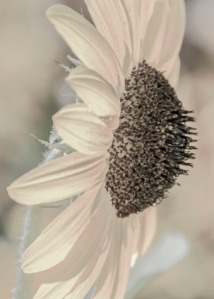 Desaturated flower.