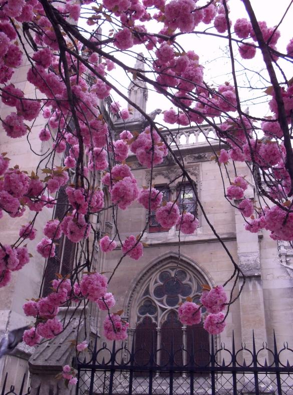 Notre Dame Fleurs