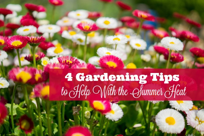 4 gardening tips to help with the summer heat all about writing and more - Gardening in summer heat a small survival guide ...