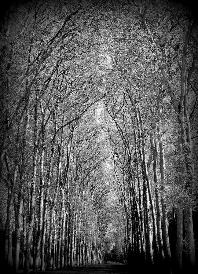 Tree Cathedral