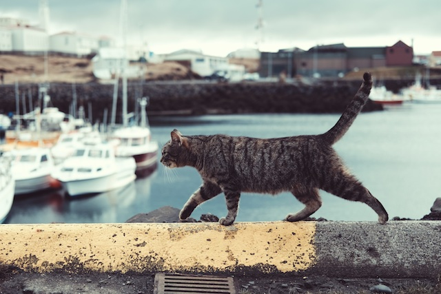 three line tales, week 70: a cat walking on a dock wall with boats in the background