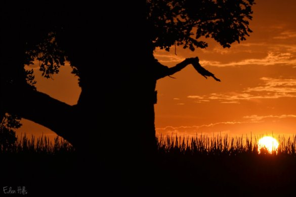 tree silhouette_0090a