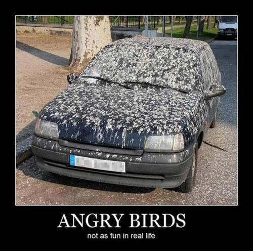 Angry-Birds-Funnies-angry-birds-30418598-500-496 (500x496)