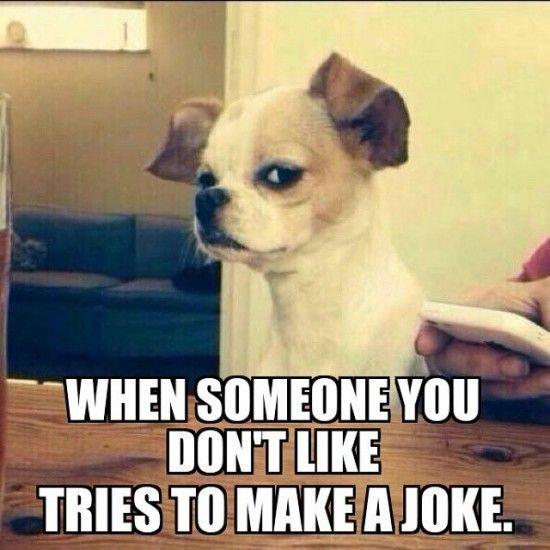 1c05122da461dad74da34c22951e740d--funny-pets-its-funny (550x550)