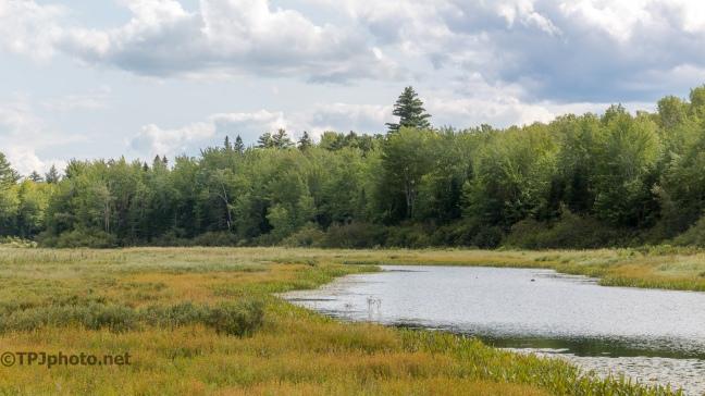 Maine Bog -Click To Enlarge