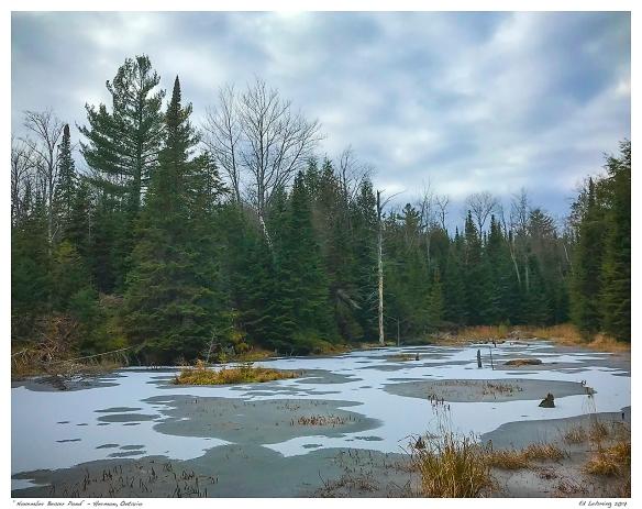 """November Beaver Pond"" - Hermon, Ontario"