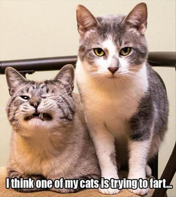 af93aa6be2557994926a082b891ad60e--funny-pets-humor-cat-funnies (574x640)