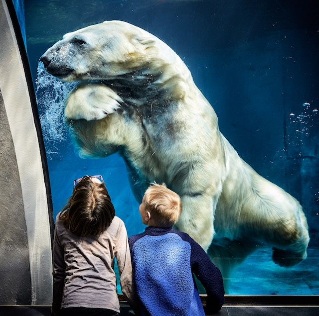 two children looking at a polar bear in a zoo