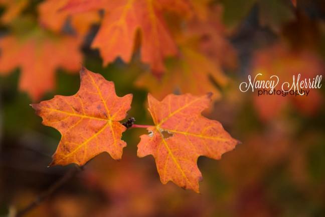 Twin fall leaves
