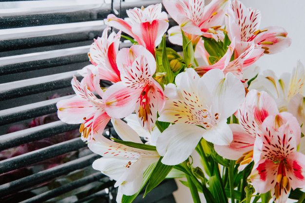 side-view-bouquet-pink-white-color-alstroemeria-flowers-near-window-blinds_141793-7958